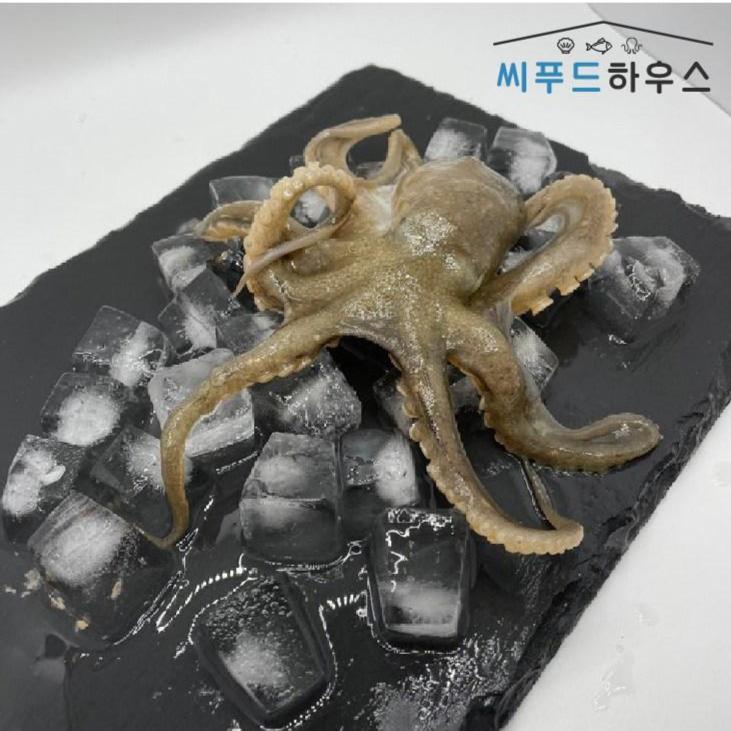 제철 국산 활 쭈꾸미 생물 냉동 알 주꾸미 1kg 가격